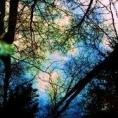 abstract-nature.jpg